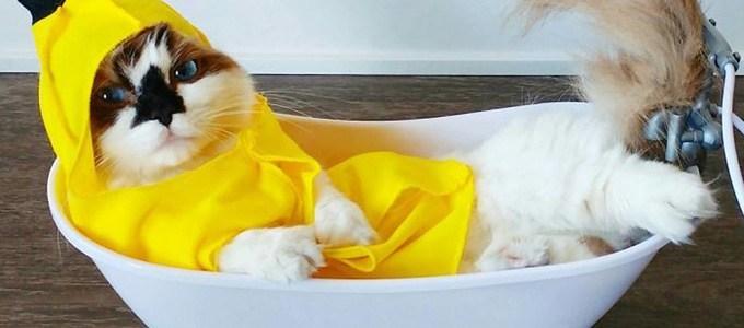 Munchkin Cat (via: boredpanda)