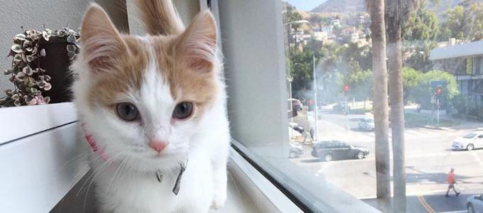 Munchkin Cats (via: boneandyarn)