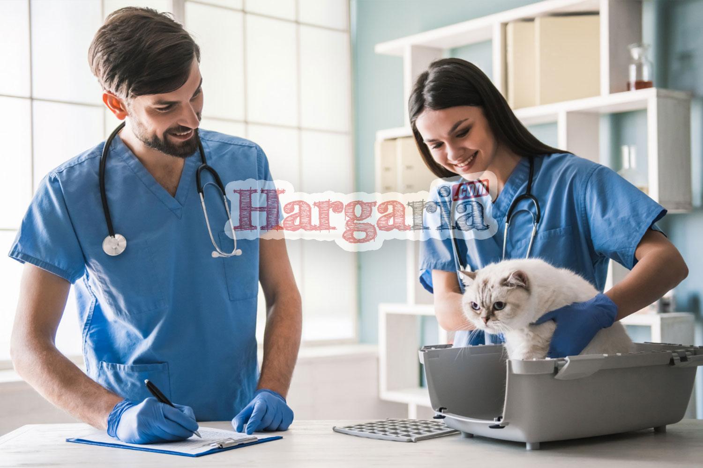 biaya perawatan dokter hewan
