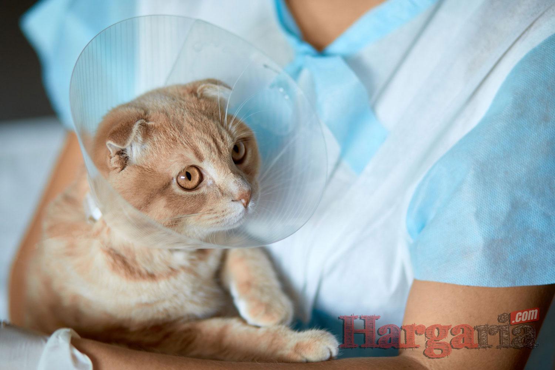 biaya pengobatan dan perawatan kucing